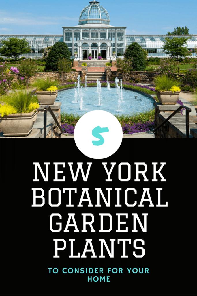 ew york botantical garden plants for your home
