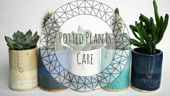 ways to care for potted plants
