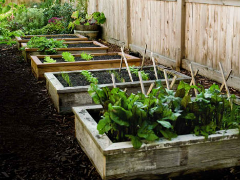raised garden from wood pallets