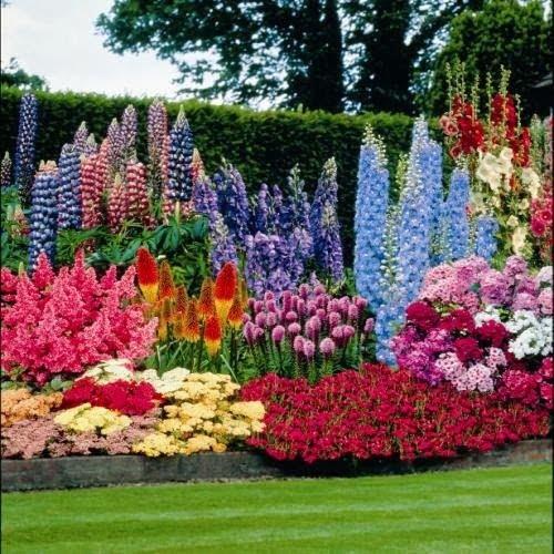 flowers, perennials
