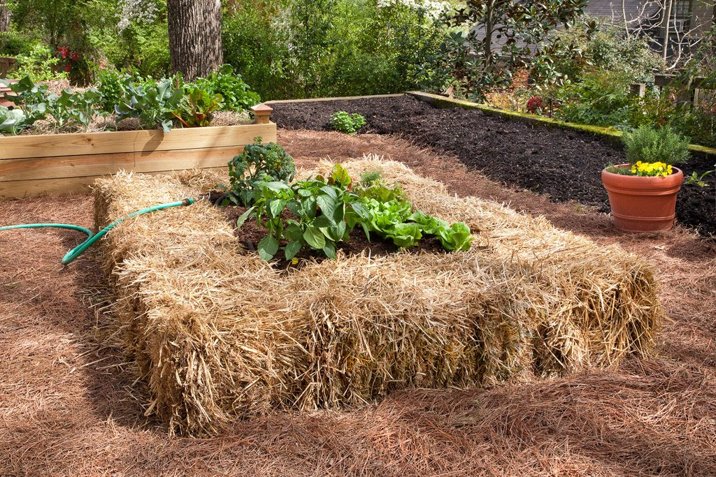straw bale raised garden