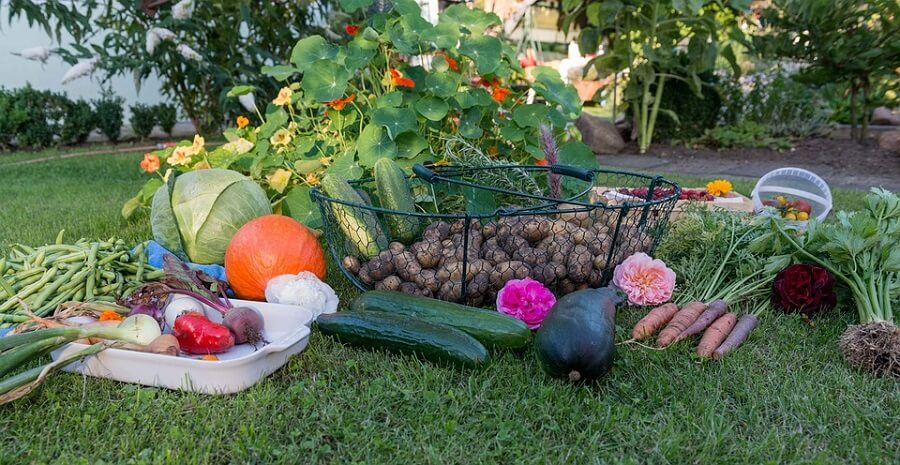 how to plant a garden vegetables