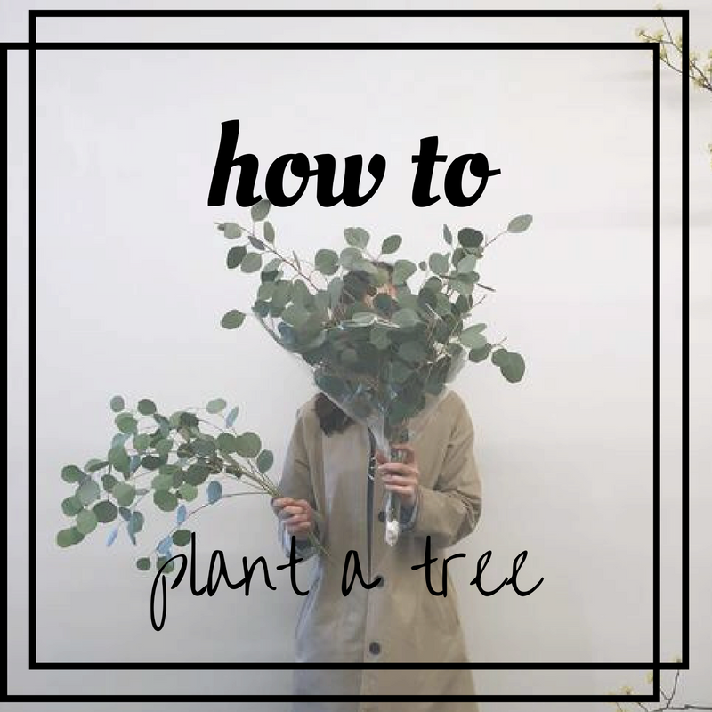 planting a tree from scratch