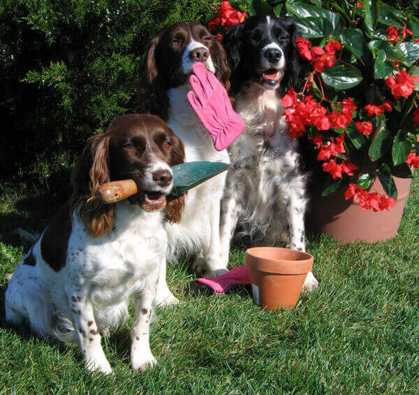 dogs-with-gardening-tools-and flowering plants