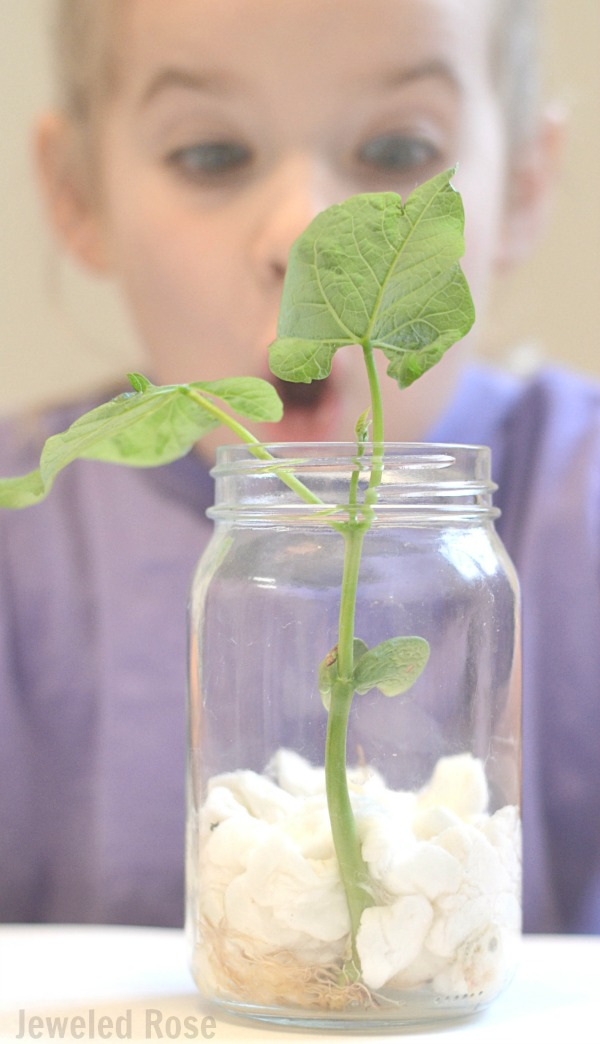 Grow a Beanstalk