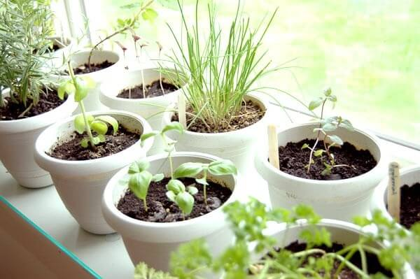 indoor herb garden plants-in-pots-near-the-window