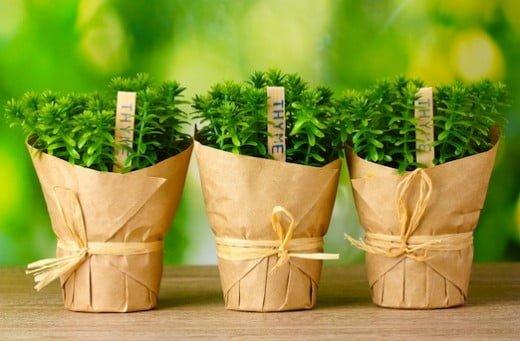indoor herb garden thyme-pots