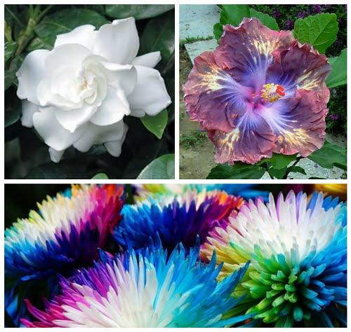 is gardening good exercise jasmine-gardenia-hibiscus-colored-crysanthemum-collage