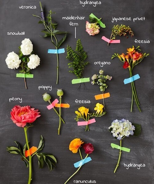 planting zones flowers examples