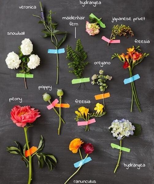 planting zones flowers examples