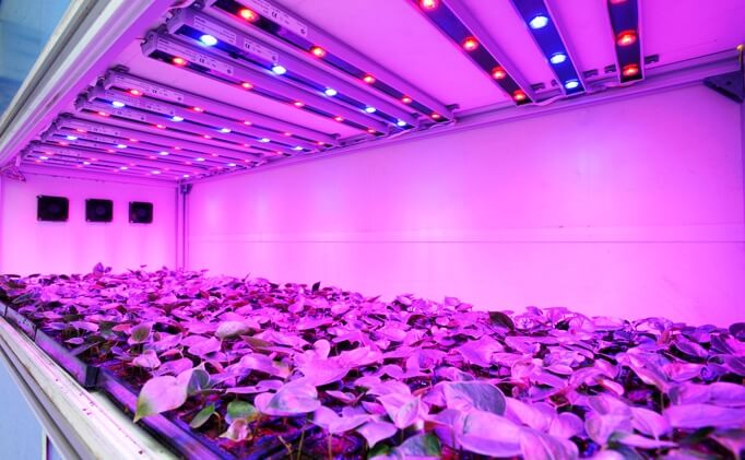 a lot of plants placed under led grow light bulbs