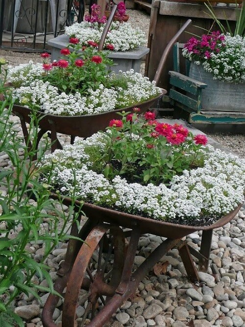 flowers planted in old wheelbarrows