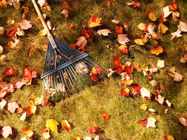 rake cleaning the leaves off a lawn