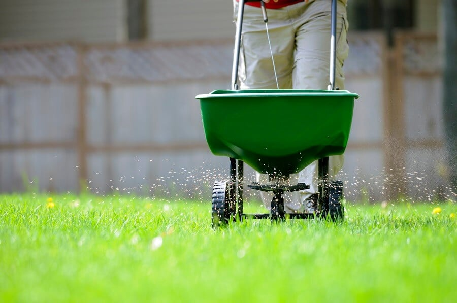 fertilizing a green lawn