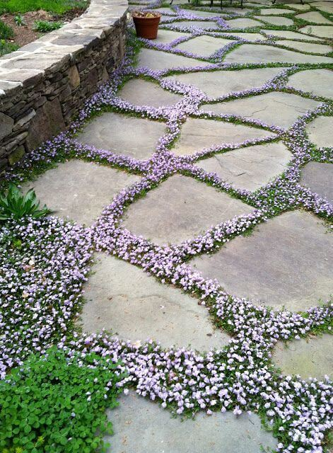 small flowers coming out of the cracks between cobblestone pieces