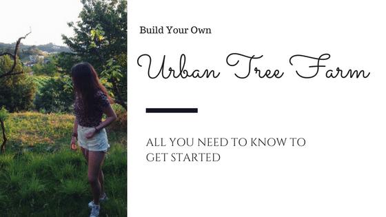 urban tree farm