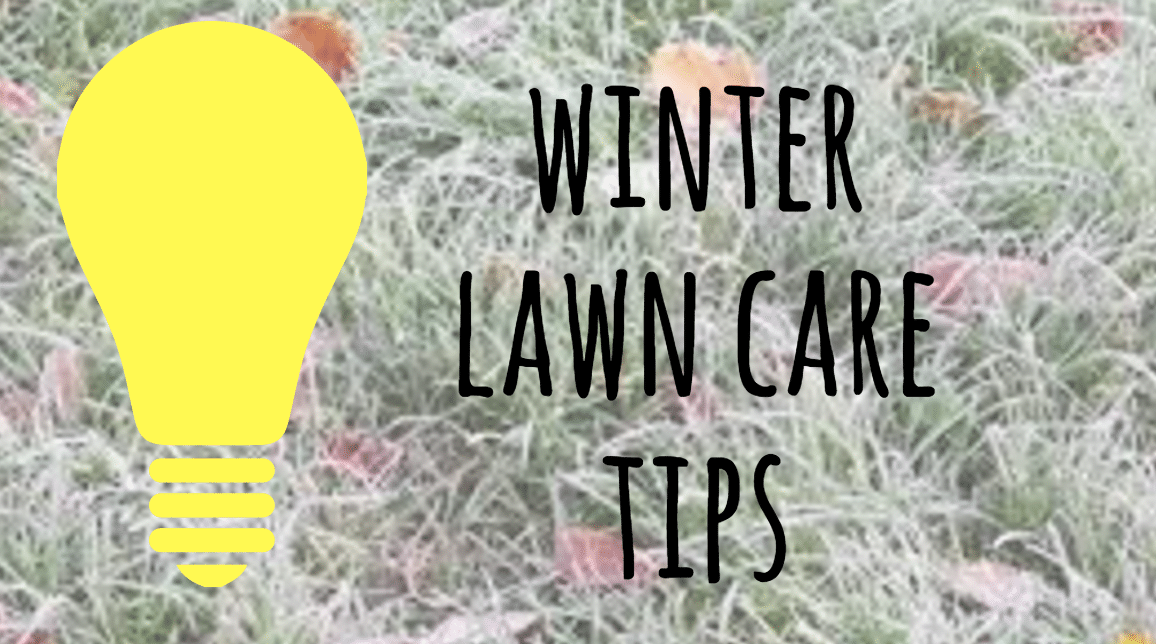 winter lawn care tips