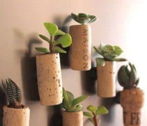 corks succlent, garden crafts