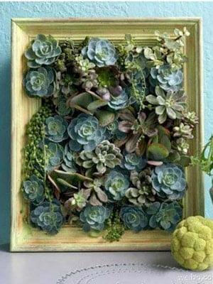 living picture succulents
