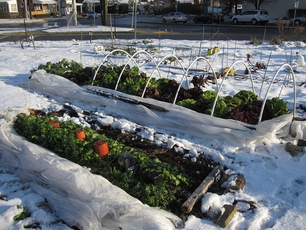 garden beds in winter
