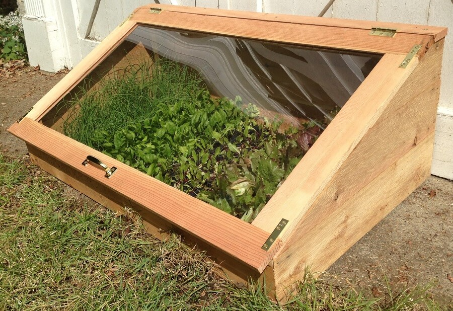 salads growing in a cold frame