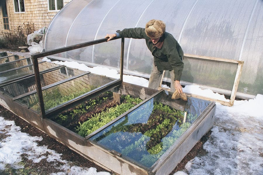 man checking on the plants in a cold frame