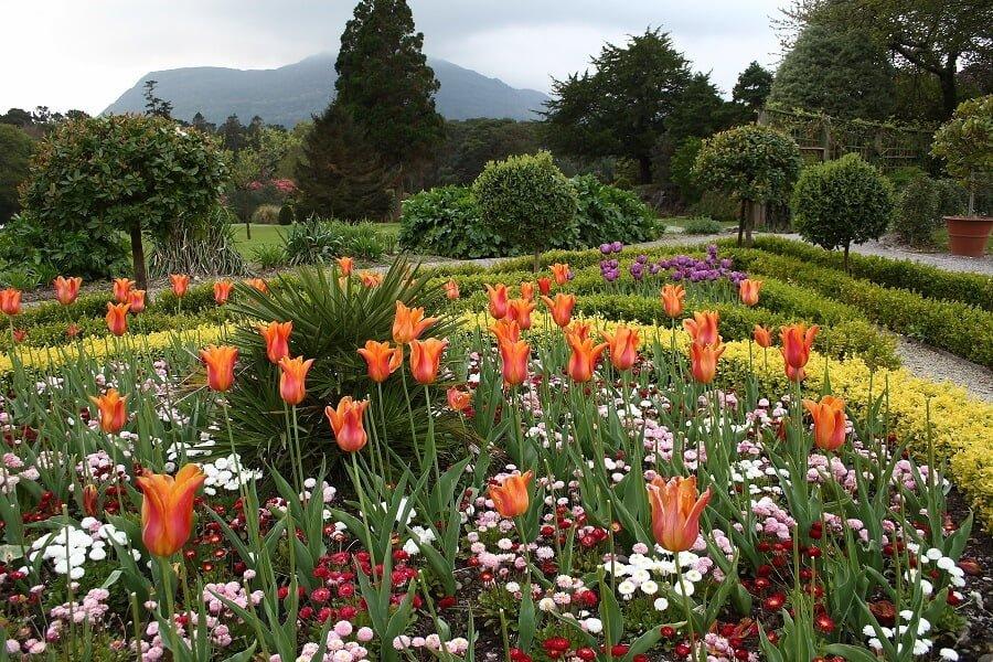 flower garden with different flower varieties