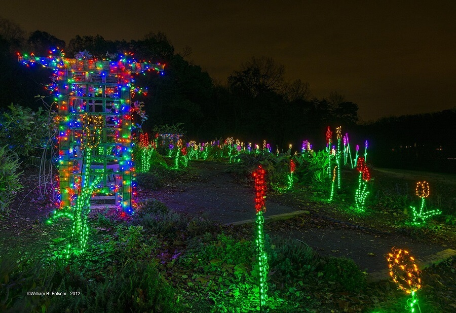 flowers made entirely out of christmas lights