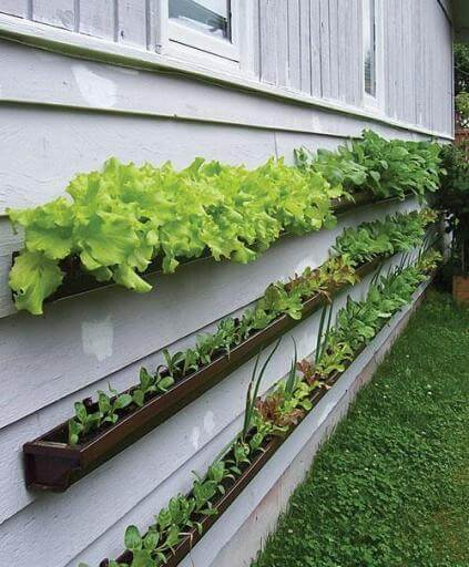 rain gutters being used as vegetable containers