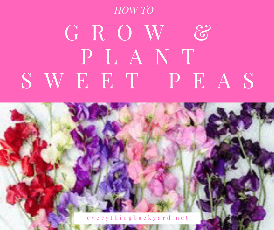 how to grow & plant