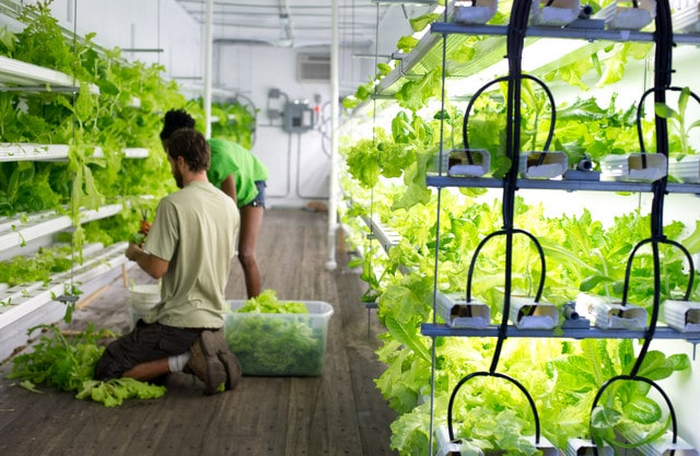 indoor urban farming