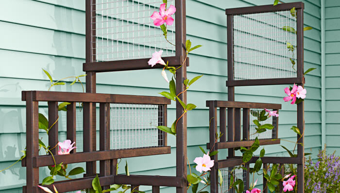 flowers climbing on a trellis
