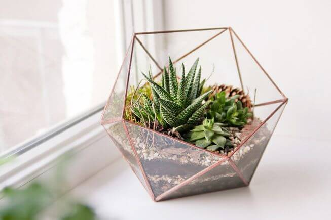 terrarium containing succulents