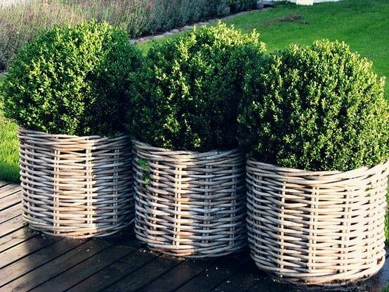 three wicker flower pots with shrubs in them