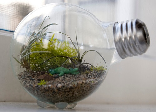 light bulb used as a terrarium