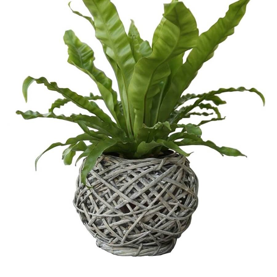 plant in a wicker pot