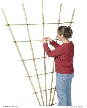 woman tying together bamboo poles to form a trellis