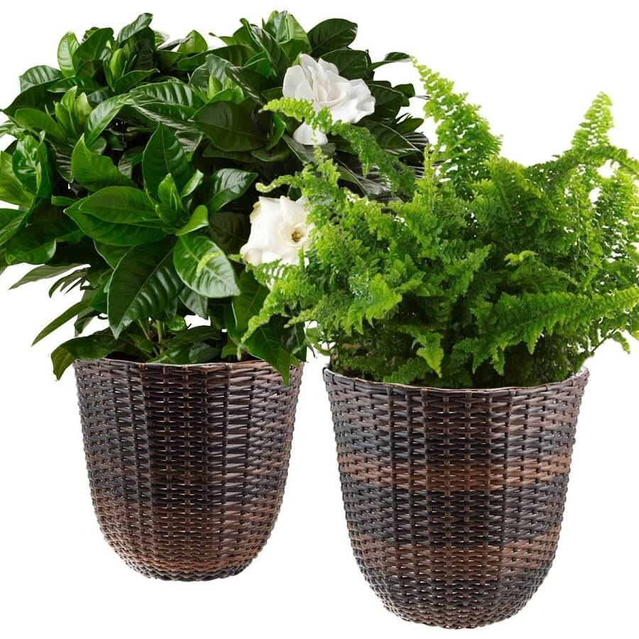 two wicker flower pots with two plants in them