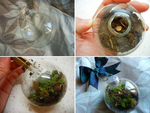 collage of how to make an ornament terrarium