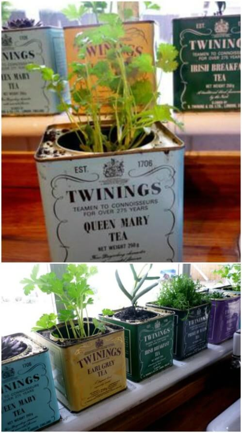 herbs planted in tea boxes