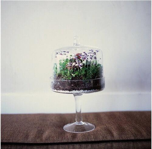 terrarium inside of a cake stand
