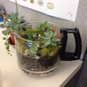 terrarium container