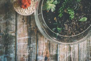 terrarium, fish bowl terrarium