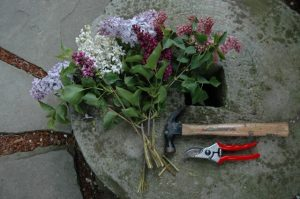 pruning tools next to a bouquet of lilacs