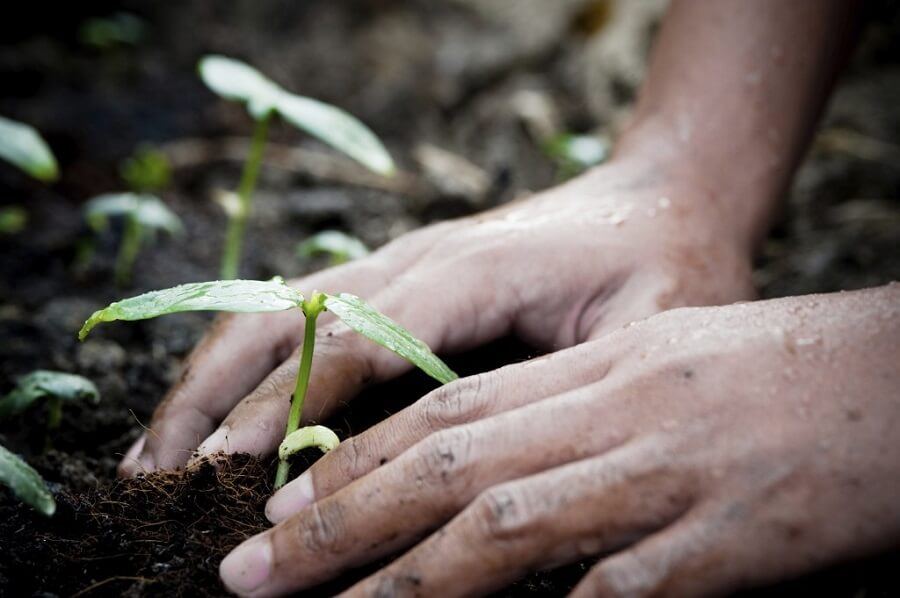 man planting a seedling with his hands