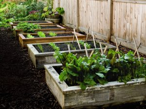 raised garden beds made of wooden boxes