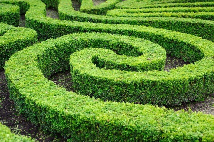 miniature maze