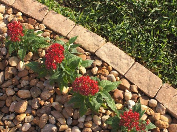 garden edging made of bricks