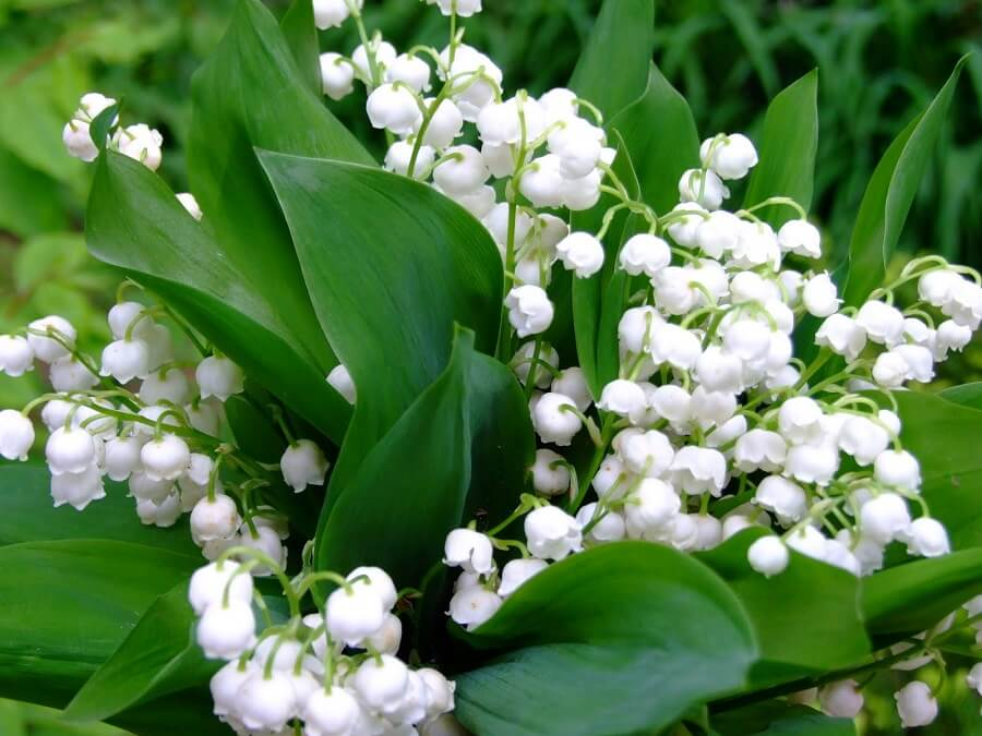 bouquet made of lily of the valley flowers