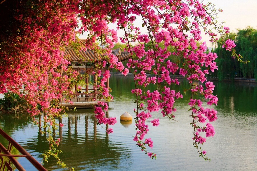 japanese flowers, japanese garden with pink flowers